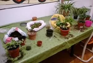 Presađivanje biljaka