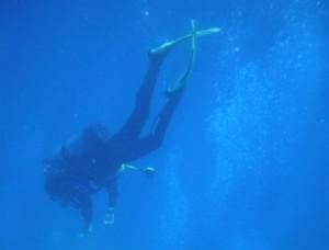 Istraživanje morskih biocenoza